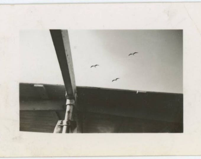 Vintage Mini-Photo Snapshot: Seagulls, c1940s (76589)