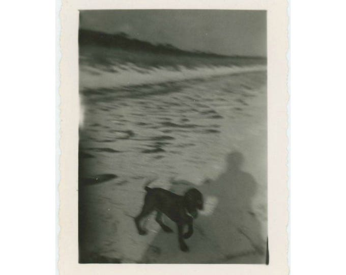 Vintage Photo Snapshot: Dog and Shadow (77591)