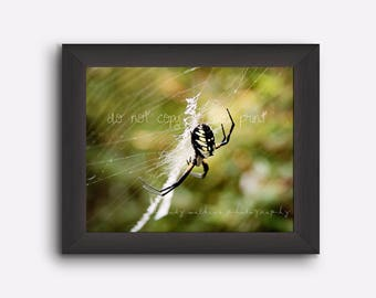 Spider photograph, spider photography, insect print, insect wall art, 5x7 print, spider 5x7 wall art, spider wall art, wall art boys room