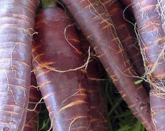 """VRCC)~""""COSMIC PURPLE"""" Carrot~Seeds!!!~~~~~~~~~Out of this World!!"""