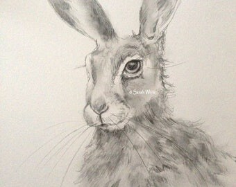 Original graphite Hare sketch