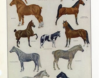 Vintage Dictionary Print of Horses. 1968.