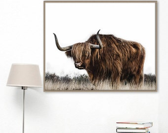 Highland cattle  photography. Bull picture. Cow poster print. Printable photography. Nature picture. Bison photography. Nature poster.