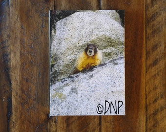 "Canvas Art -  Nature Photography - ""Marmot on Granite Boulder"" 5 by 7 Inch"