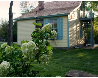 Cottage Hydrangea Photo - Country Garden Photograph - At Sunset - Pale Green Flower Nature Photo Art - Yellow House - Turquoise Shutters