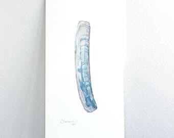 Jackknife Clam Shell Original Watercolor Painting