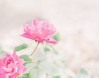 Lovely roses in my garden-flower photography - flower photo- cottage garden- roses(5 x 7 Original fine art photography prints) FREE Shipping