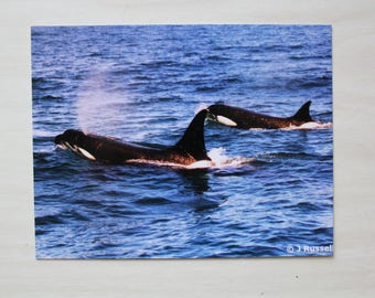 ORCA POSTCARDS - set of six - FREE Shipping Worldwide
