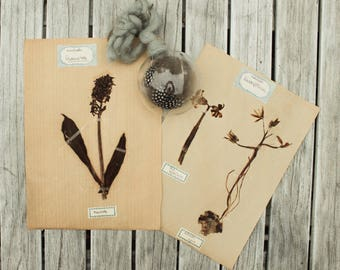 Vintage Botanicals, Herbarium Specimens, Botanical Art, Pressed Plants, Modern Farmhouse Decor, Vintage Botanicals
