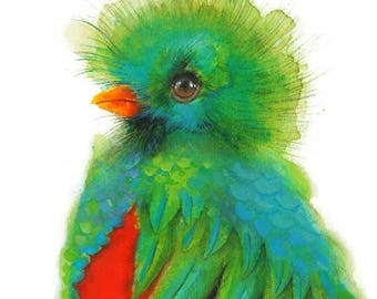 SALE Quetzal Bird watercolor - Giclee Print, Colorful Bird Illustration, vibrant blue, green, and red,  Paradise Bird.