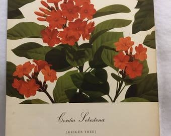 Cordia Sebestena (Geiger Tree) Bernard & Harriet Pertchik 1951 Print from Flowering Trees of the Caribbean Alcoa Steamship