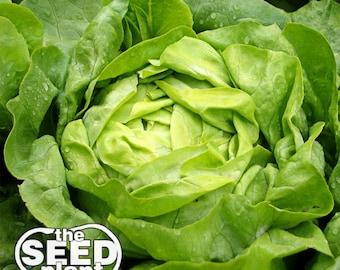 Buttercrunch Lettuce Seeds- 1,500 NON-GMO SEEDS