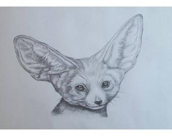 Fennec Fox Cub - A4 Print of an original pencil drawing.