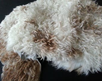 Curly lamb full skin