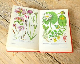 Vintage flora book guide.Vintage flower field guide.Flora guide.Vintage flora illustrations.Book pages flowers.Collage.Flower wall decor.