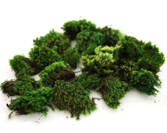 1 lb Preserved Clump Moss. Small Pieces