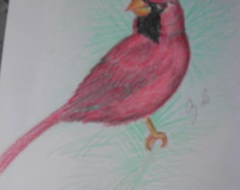colored pencil drawing cardinal bird
