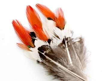 2-3 Inch Golden Pheasant Feathers (10) Orange Tipped Feathers. Red Tipped Pheasant Neck Feathers. Red Bird Feathers. Short Feathers