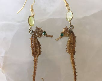 Macabre Crystal Eyed Seahorse Earrings