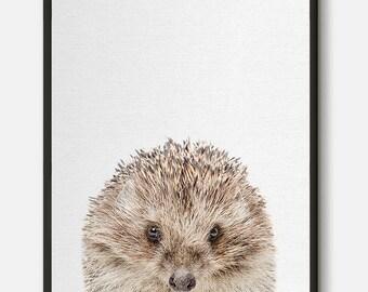 Hedgehog Print, Hedgehog Art, Hedgehog Photo, Animal prints, Photography Art, Animal Wall Art, Nursery Decor, Nursery animals, Photo Art