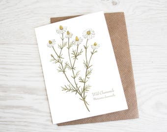 Wild Chamomile, A6 Botanical Wild Herb Greeting Card