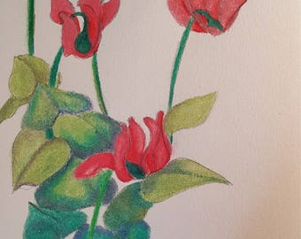 Cyclamen (drawing with pencil on thick paper)