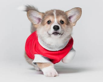 T-shirt for puppy, wear for puppy, t-shirt for dog, clothes for corgi