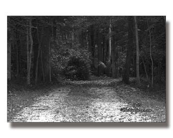 Woodland Road {Photography} for Framing, Greeting Cards, and Postcards