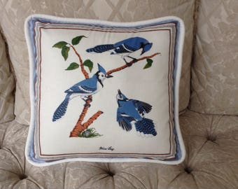 Blue Jay with white piping