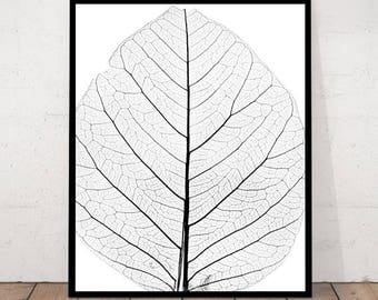 Leaf Black and White Photography, Leaf Black and White Print, Leaf Photography, Minimalist Leaf Print, Minimalist Leaf