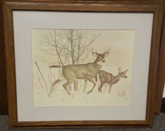 Whitetail Deer framed print by Glen Loates in 1977