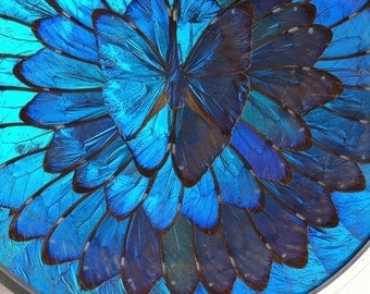 Irridecent Blue MORPHO Butterfly Wings Wall Plate