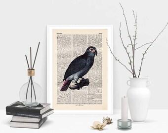 Pressure - EXOTIC BIRD No.. 2 - antique book page