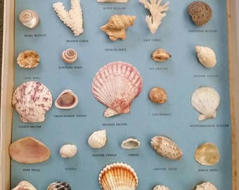 1959 Treasures of the Sea Collection Shells Nautical Ocean Beach Shore Sand Summer Education