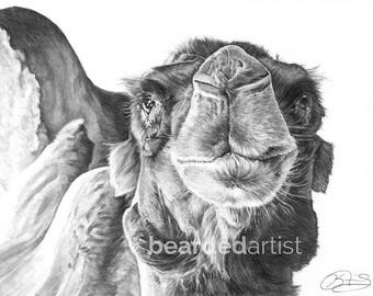 "8.5x11"" OR 11x17"" Print of Humphrey the Camel from the Cincinnati Zoo"
