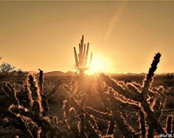 Southwest Art, Sonoran Sunset, Desert Landscape Photography, Arizona Photos, Desert Print, Fine Art Print, Desert Sunset, Nature Photography