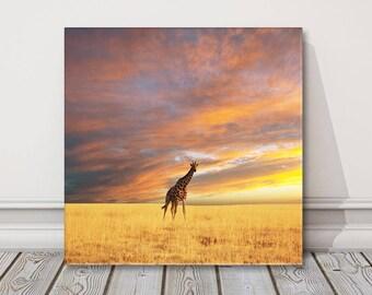 giraffe walking at sunset.  Canvas Print . Safari picture