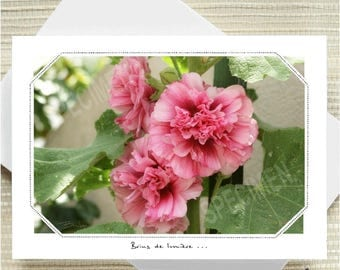 437.  The Hollyhock double...