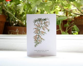 Asparagus Fern: Greeting Card