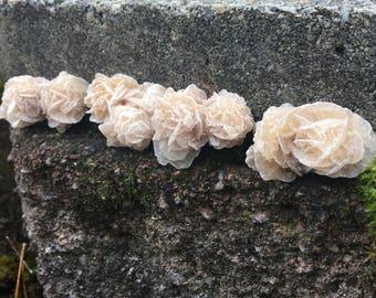 Natural Selenite Gypsum Desert Rose