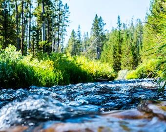 Yellowstone Stream