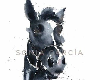 Horse lithograph