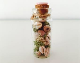 Mini terrarium - shell - shell