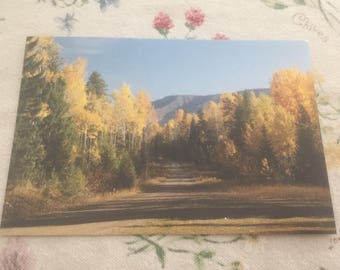 Road Less Traveled By Postcard