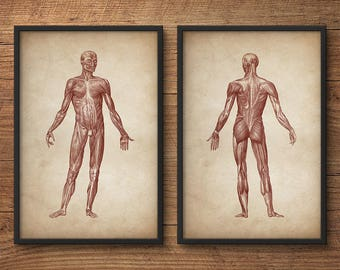 Anatomy print set of 2, Human anatomy posters, Anatomy home decor, Anatomy posters, Anatomy illustrations, Large print, Human muscle system