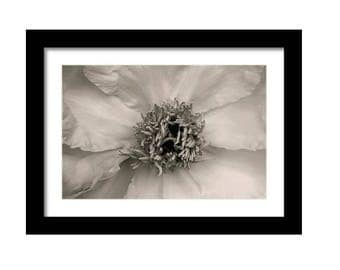 Center of Attention, Bold Botanical Black and White Photographic Print