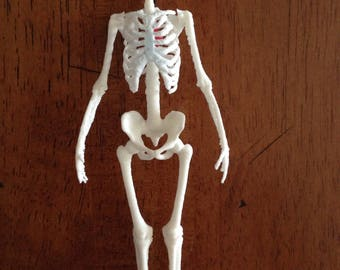 Beating Heart Skeleton
