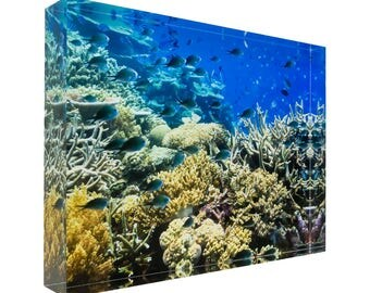 Fish on tropical coral great barrier reef 30x20x4cm Acrylic Photography Print