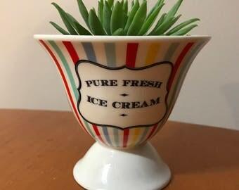 Ice Cream Sundae Succulent