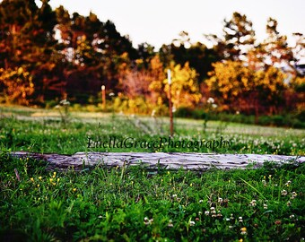 wood log in field